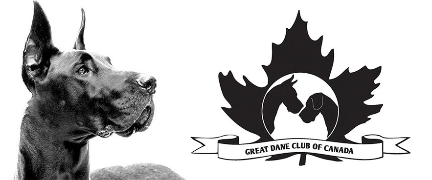 Learn about Great Danes, club membership and events, and more.
